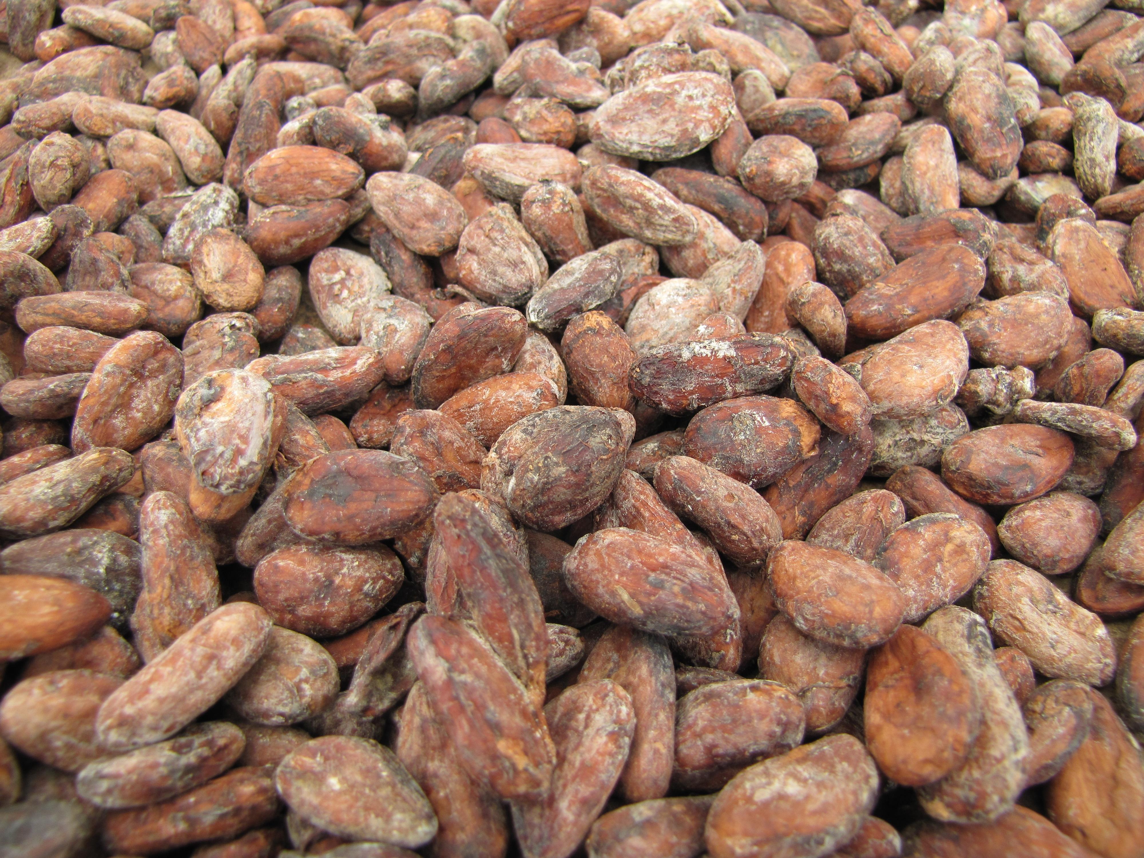 Fermentované a usušené kakaové boby