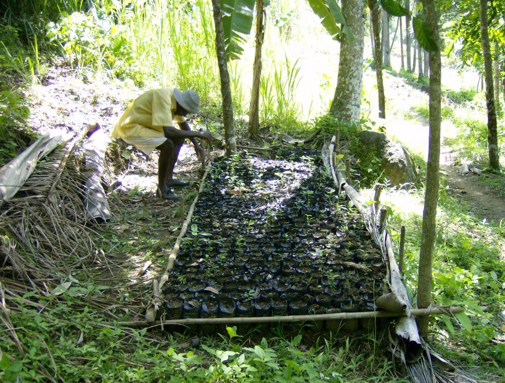 Farmáři při sadbě kakaových plantáží