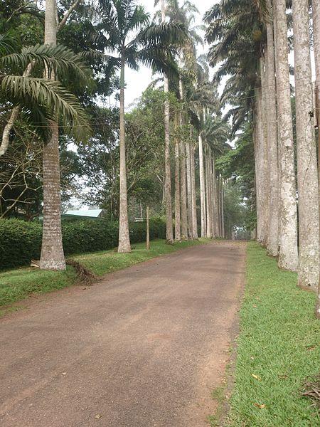 Aburi_Botanical_Gardens_05