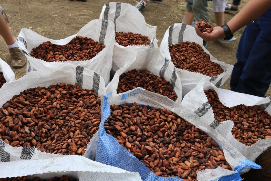 pytle s kakaovými boby - Kolumbie